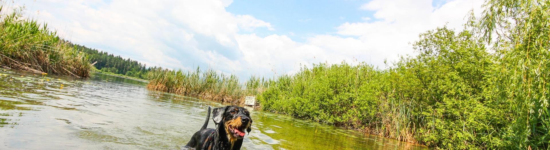 Baden mit Hund am Klopeiner See