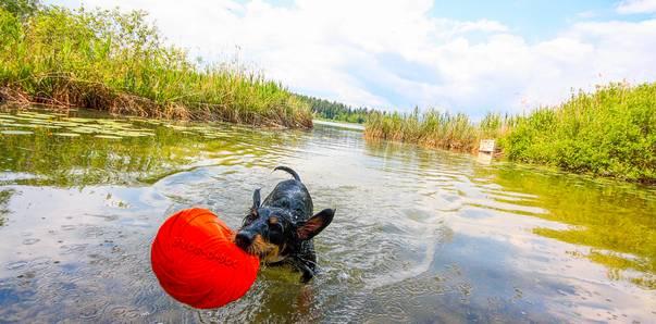 Aktiv-Urlaub mit Hund – Spaß im Wasser